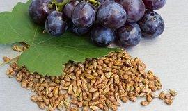 Целебные свойства виноградных косточек м